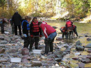Glacier institute in the river